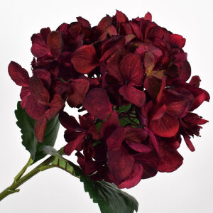 Hortensia steel bordeaux