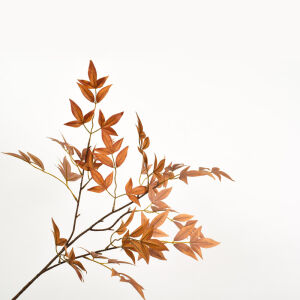 Tak bladeren esdoorn