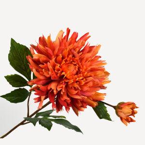 Chrysant steel oranje