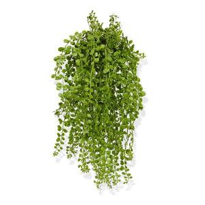 Zijden hangplant Dischidia